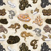 Small Ball Python Morph Pattern in Parchment