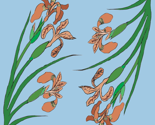 Rapricot_iris_pattern_section_thumb
