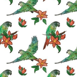 Watercolor Conures