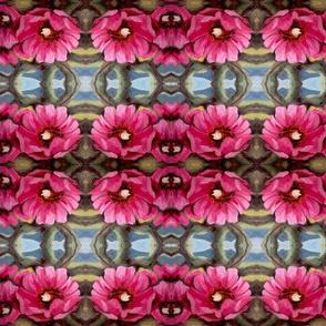 cholla desert flower