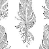 1849b_feathers_bw_050_shop_thumb