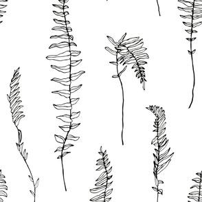 jumbo fern black and white