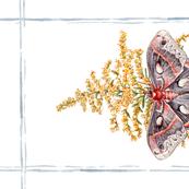Tea Towel: Watercolor Cecropia Moth