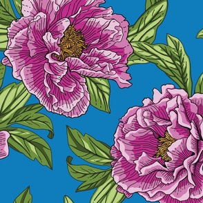 Pink Purple Peony Flowers with Green Leaves on Blue