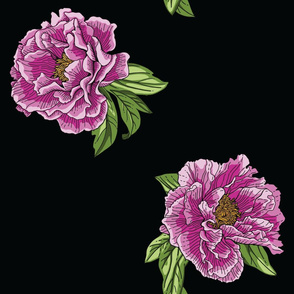 Pink Purple Peony Flowers with Green Leaves on Black Background