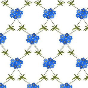 Forget-me-not Clear