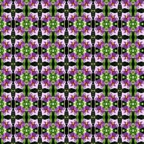 Eggplant blossoms