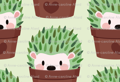 Smallest Hedgehogs disguised as cactuses