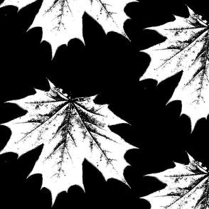black and white maple leaf large