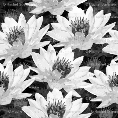 Water Lilies in Black and White