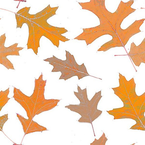 oak leaves-large scale