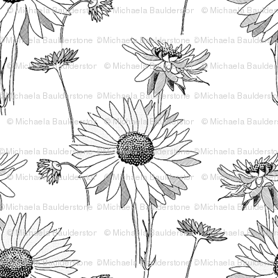 Paper Daisies Large Scale