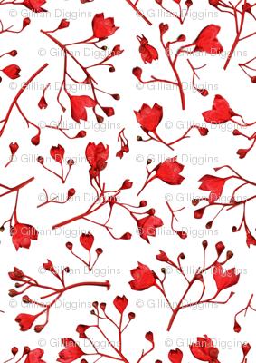 Australian Flame Tree Flowers