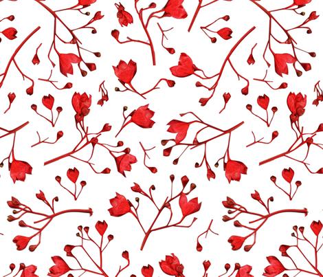 Australian Flame Tree Flowers fabric by gilli_dig on Spoonflower - custom fabric