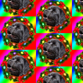 Newfy Wreath rainbow background