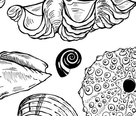Shells-3_shop_preview