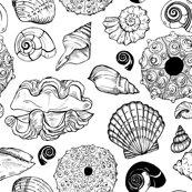 Shells-3_shop_thumb