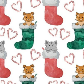 Stocking cats