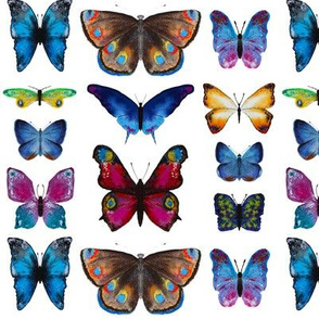 Butterflies collection || hand drawn