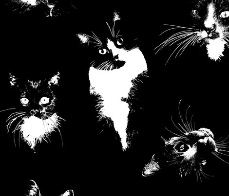 Rrblack-and-white-cats_shop_preview