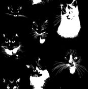 Rrblack-and-white-cats_shop_thumb