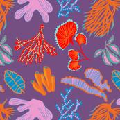 Coral reef lavender