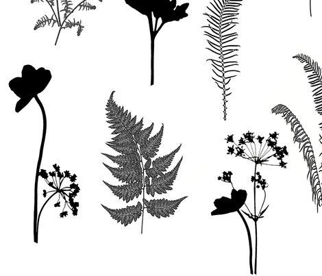Rblack_and_white_botanicals_redu3_shop_preview