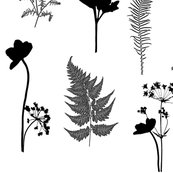 Rblack_and_white_botanicals_redu3_shop_thumb