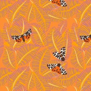 garden tiger_1