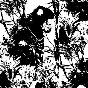 Black Cockatoo _ Banksia Nut-8834