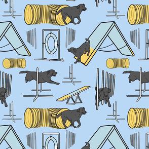 Simple black Labrador Retriever agility dogs - blue
