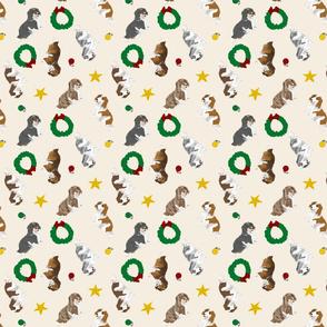 Tiny piebald Longhaired Dachshunds - Christmas