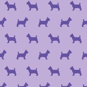 Yorkshire Terrier Purple
