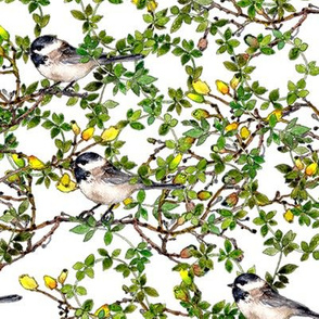 chickadees in green leafy bush watercolor