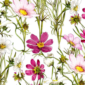 large white and pink cosmos in watercolor