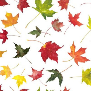 colorful watercolor fall maple leaves