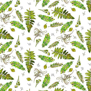 woodland ferns in watercolor