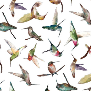 hummingbirds of all shapes in watercolor
