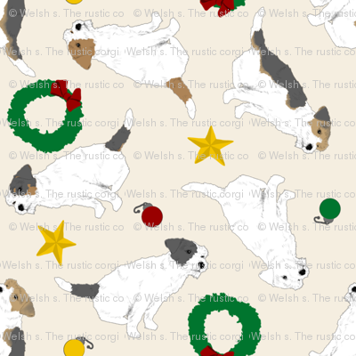 Tiny Jack Russell Terriers wire coat - Christmas