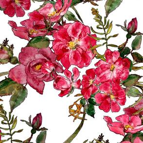 red roses and rosebuds in watercolor