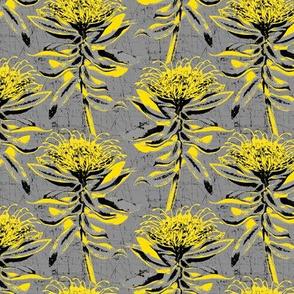 yellow protea on grey