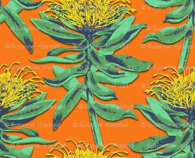 protea on orange