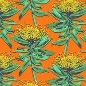 Rprotea-on-orange_shop_thumb
