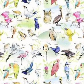 Alphabet of birds v2
