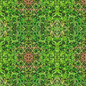 Mystic Clover Green Bright