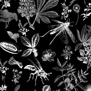 large scale insect garden black and white