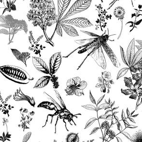 jumbo insect garden black on white