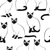 Siamese Cats Big Black and White