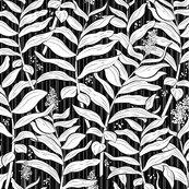 Rrrcoastalfern-whiteonblackbkgrnd_shop_thumb