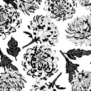 chrysantemum black leaf